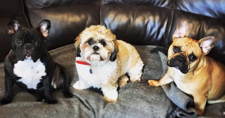 beginners-guide-to-starting-a-dog-day-care